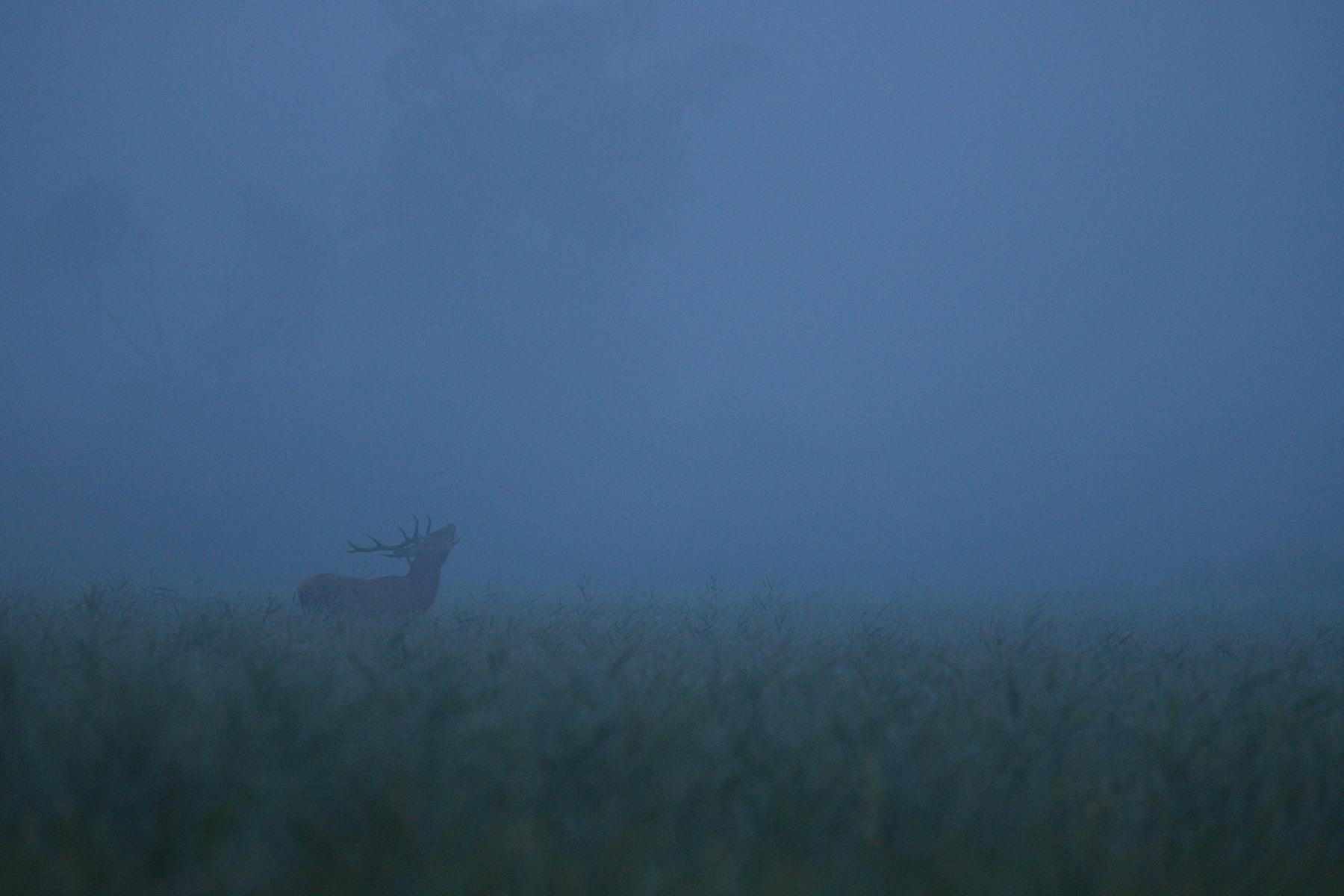 jeleň lesný (Cervus elaphus) Red deer, NPR Kláštorské lúky, Turčianska kotlina, Slovensko Canon EOS 6D mark II, Canon 400 mm f5.6 L USM, f5.6, 1/160, ISO 2000, 16. september 2019