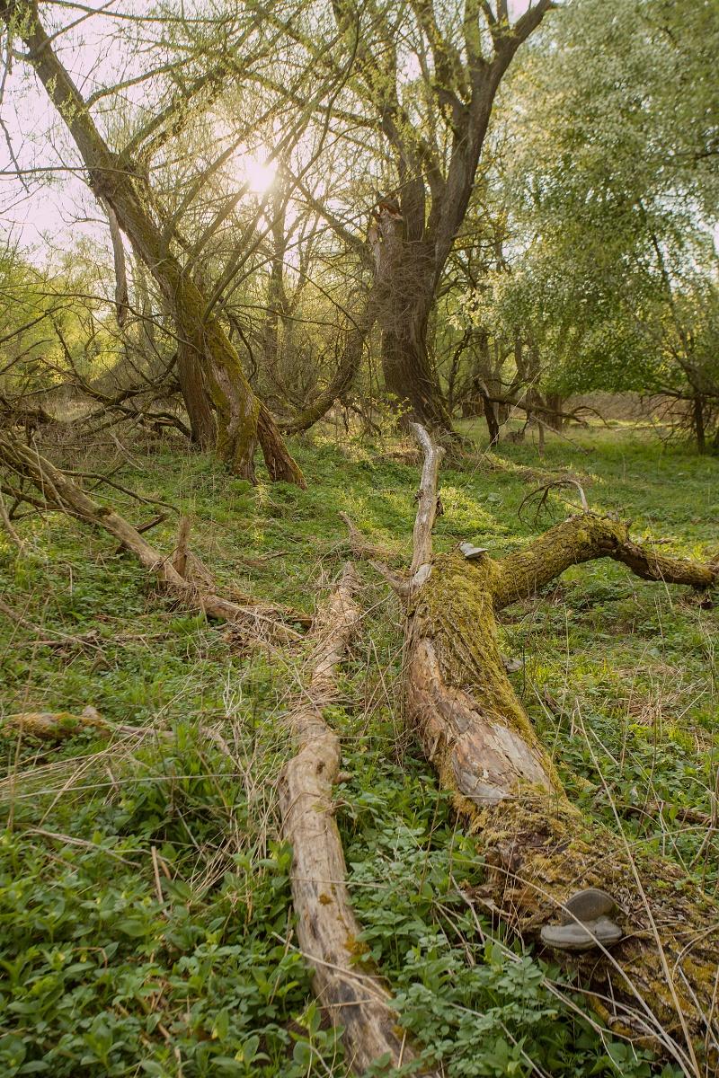 lužný les, NPR Kláštorské lúky, Turčianska kotlina, Slovensko Canon EOS 6D mark II, Canon 17-40 f4 L USM, 40 mm, f8, 1/125, ISO 320, 1. máj 2020