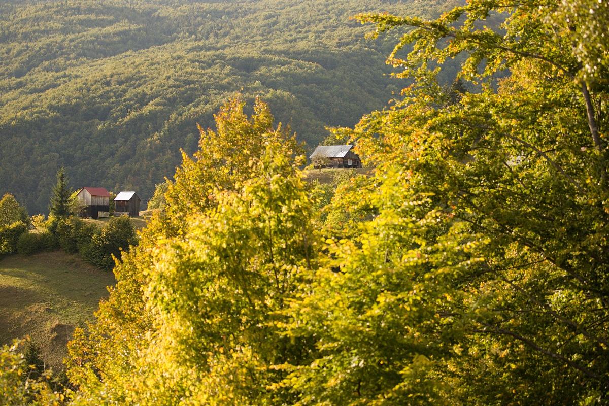 Luhei, Munții Maramureșului, Romania Canon EOS 6d mark II + Canon 100-400 f4.5-5.6 L IS II USM, 100mm, 1/2000, f4.5, ISO 1250, 20. september 2020