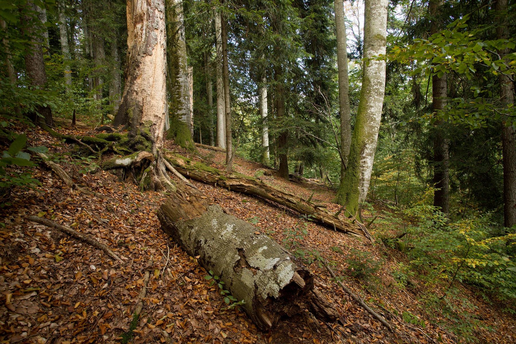 Paulic valley, Munții Maramureșului, Romania Canon EOS 6d mark II + Canon 17-40mm, 20mm, 1/60, f6.3, ISO 1000, 25. september 2020