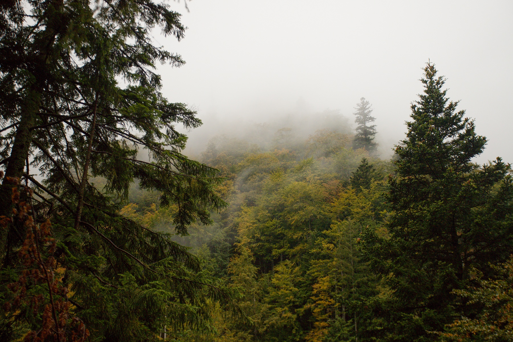 Criva valley, Munții Maramureșului, Romania Canon EOS 6d mark II + Canon 17-40mm, 40mm, 1/2000, f4, ISO 1000, 29. september 2020