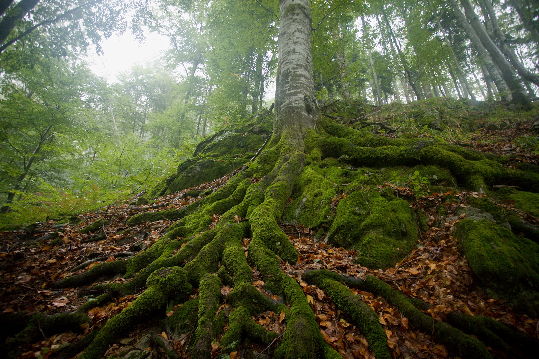 Criva valley, Munții Maramureșului, Romania Canon EOS 6d mark II + Canon 17-40mm, 17mm, 1/13, f4, ISO 2000, 29. september 2020