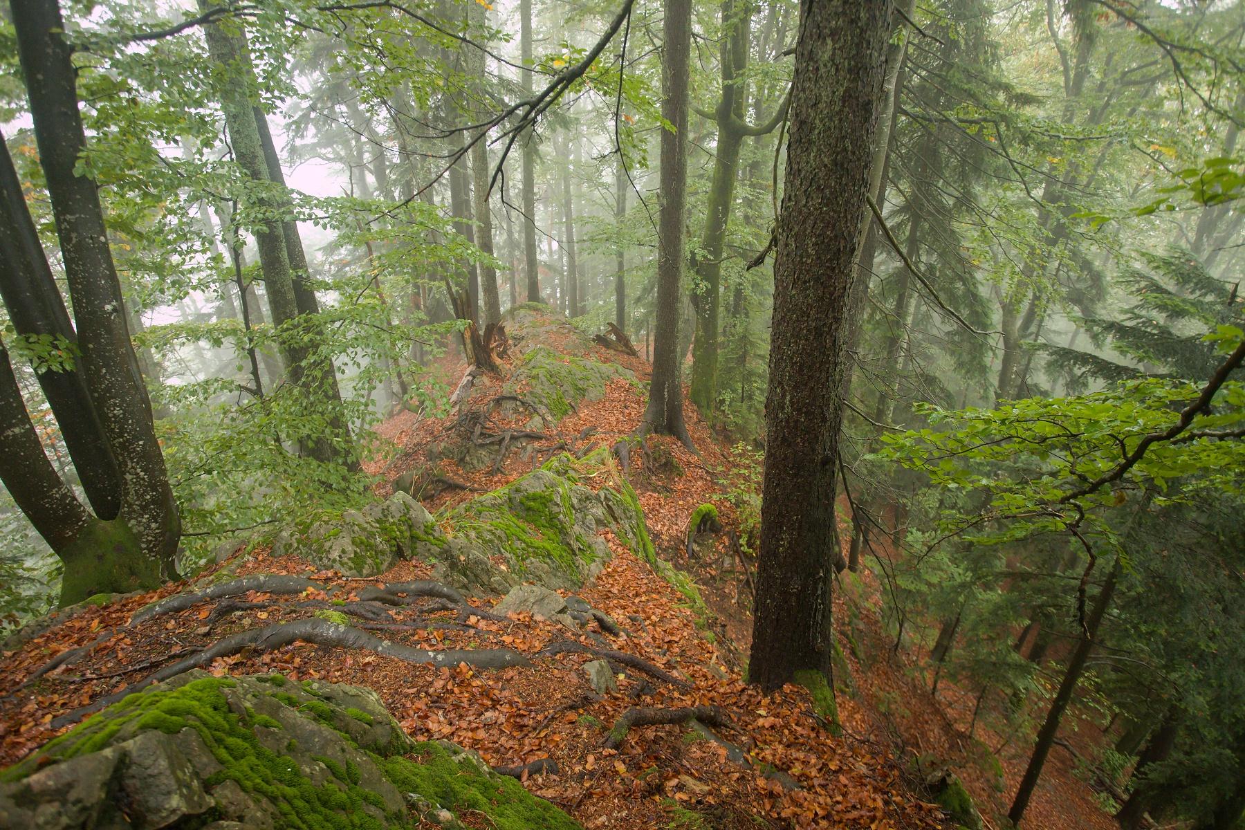 Criva valley, Munții Maramureșului, Romania Canon EOS 6d mark II + Canon 17-40mm, 22mm, 1/40, f4.5, ISO 2500, 1. október 2020